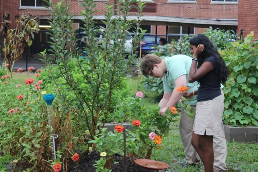 Sri Velrajan(12) and Todd Simmons(12) working in the Spartan Garden.