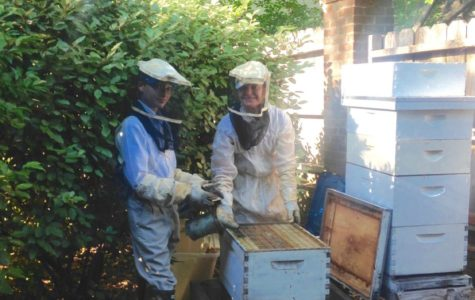 Student beekeeper hosts his own bee colonies