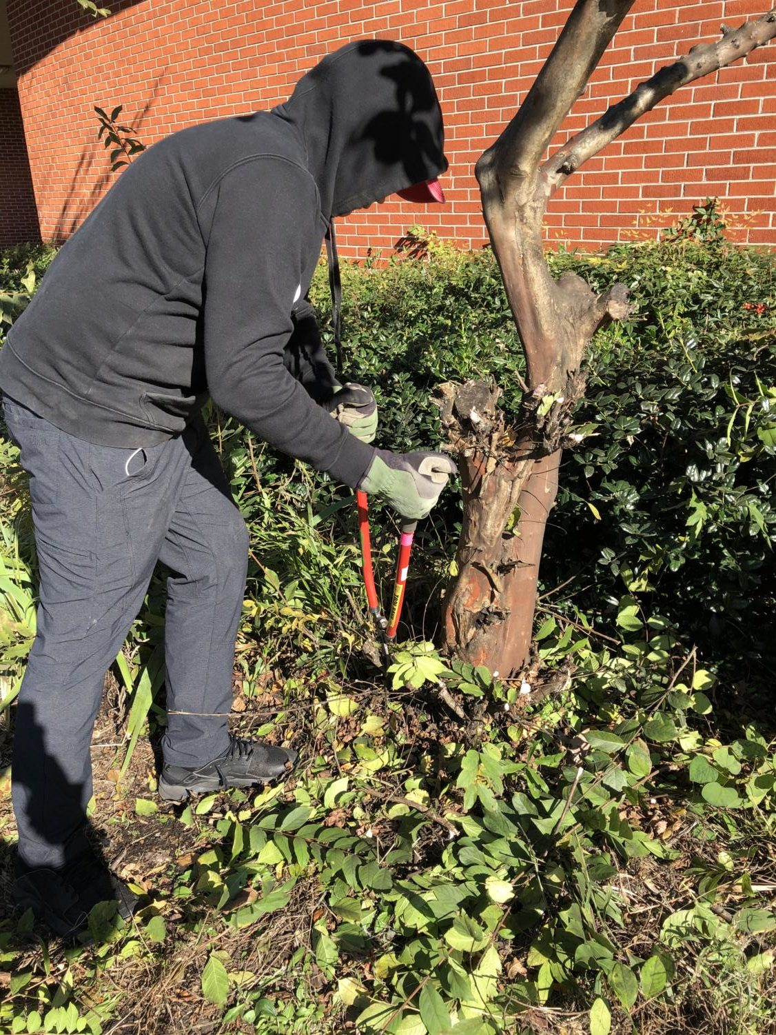 John Phebus (9) works hard to prune a tree. This will help improve the health of the plant.