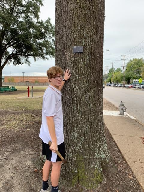 George Metcalf (12), a catalyst for White Station now having an arboretum, nails on a label to a tree on White Sation's campus. With over 30 trees on campus, over 30 labels had to be written and made for each type of tree.