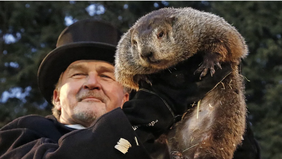 """Supposedly, Punxsutawney Phil the groundhog has been predicting the weather since 1886, which is when the Groundhog Club established itself in American Culture. Normal groundhogs live up to six years, but this special groundhog is given a special """"elixir of life"""" annually to keep him alive forever."""