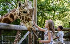 The argument in favor of zoos and animal captivity