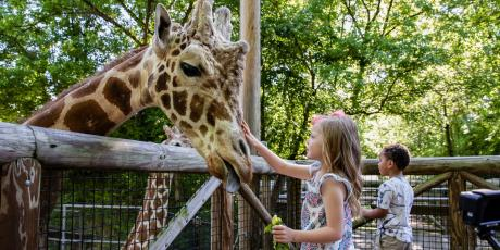 At zoos, people are given the opportunity to interact with animals. Close-knit encounters with animals promote education by providing children opportunities to learn about wildlife conservation.