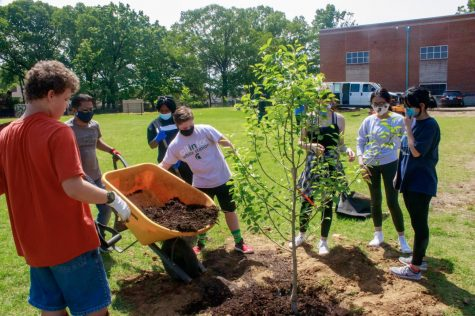 Volunteers help plant one of the first trees, an Asian Pear. During the Bluff Orchard project, volunteers completed various tasks including moving mulch, shoveling dirt and transporting plants.