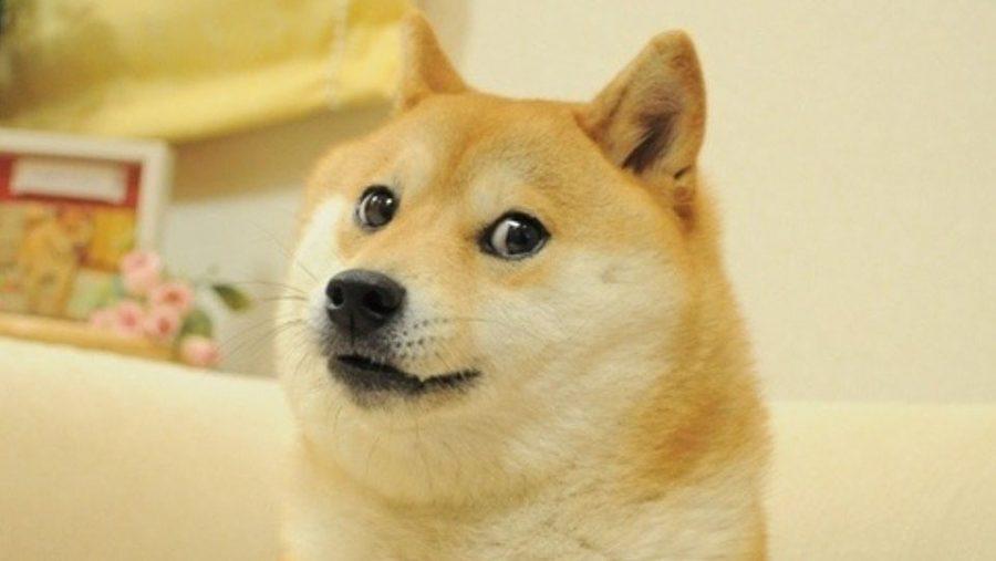 Dogecoin: the million dollar meme